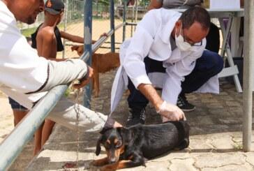 Vacinação antirrábica: Lauro de Freitas imuniza mais de mil cães e gatos neste sábado (11) e alcança 67% da meta anual