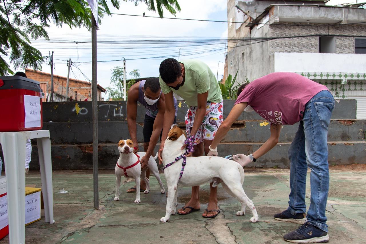 Após ação deste sábado (4), Lauro de Freitas alcança mais de 56% da meta anual para vacinação antirrábica em animais