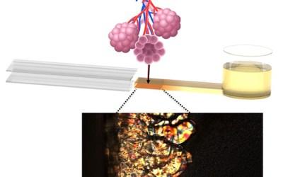Un dispositif millifluidique pour étudier le film pulmonaire en conditions hors-équilibre