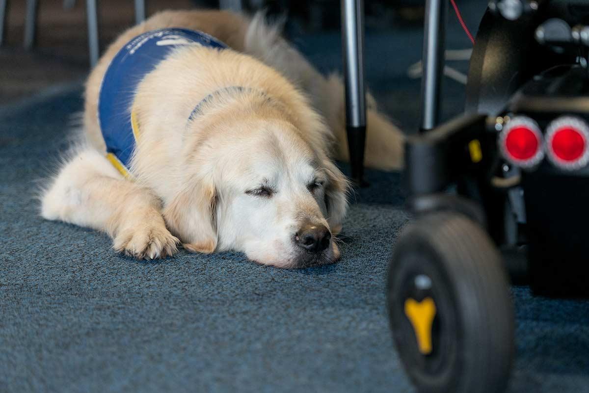 Vivre avec un chien d'assistance | GI LGMD | AFMTELETHON