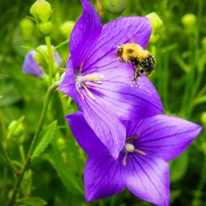 Pollinator Day @ Lehigh Gap Nature Center | Slatington | Pennsylvania | United States