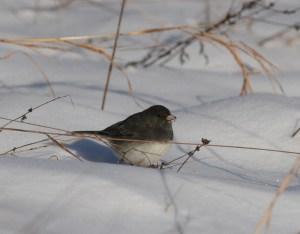 Winter Bird Survey @ Lehigh Gap Nature Center