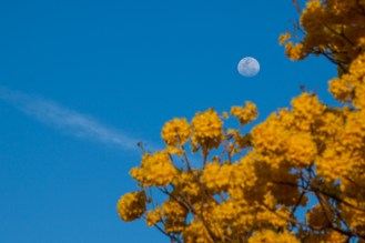 La Luna, testigo de la belleza del amarillo