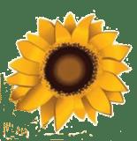 Image of sunflower head