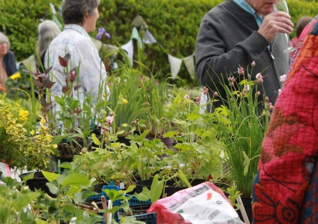 Photo of VPA plant sale