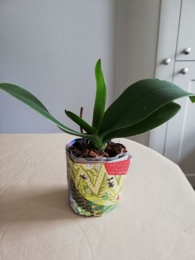 Photo of home made plant pot