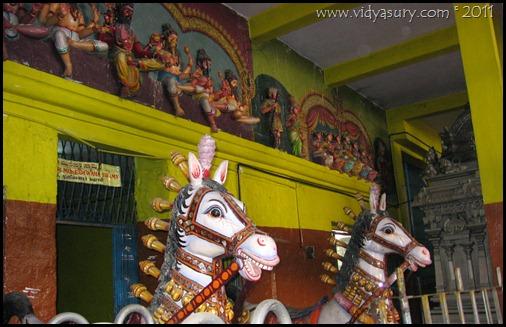 Vidya Sury horse