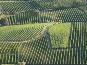 travel to Piedmont