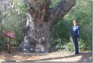 "Kay near the 400-year old ""Big Tree"" in Aransas NWR"