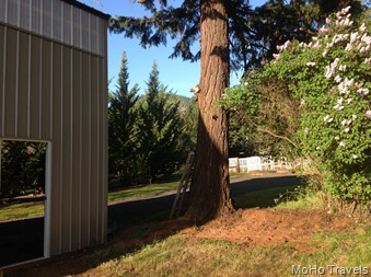 overhanging branches and the old coop are gone