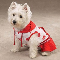 roupa de cachorro
