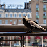 birdStarbucks.jpg