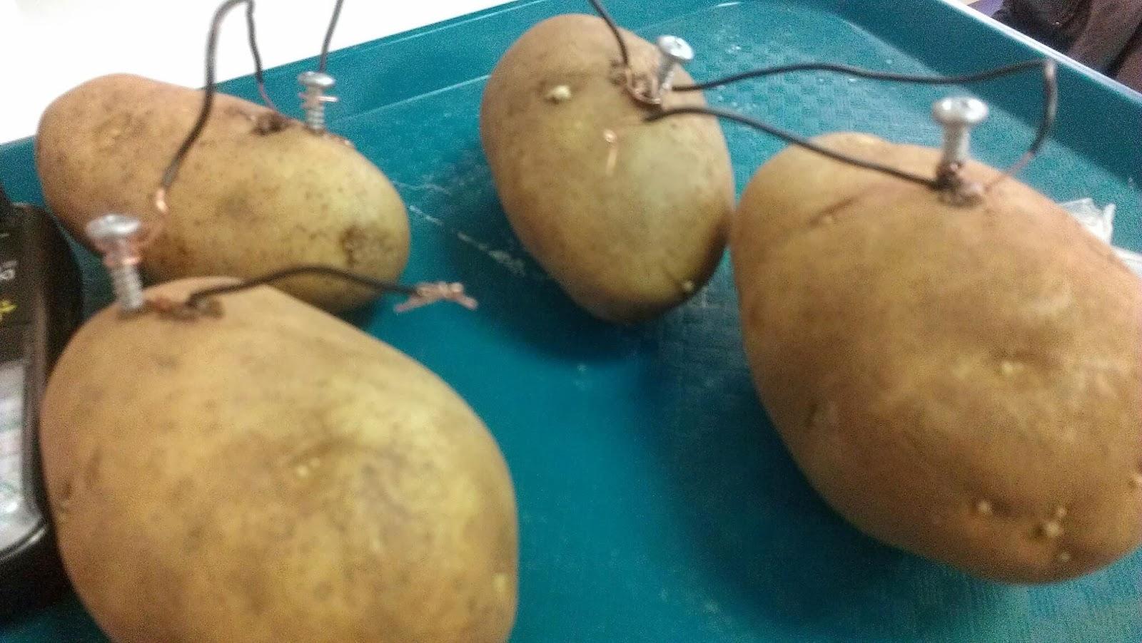 Citrus Fruit Battery Science Projects Lemon Diagram Vegetable