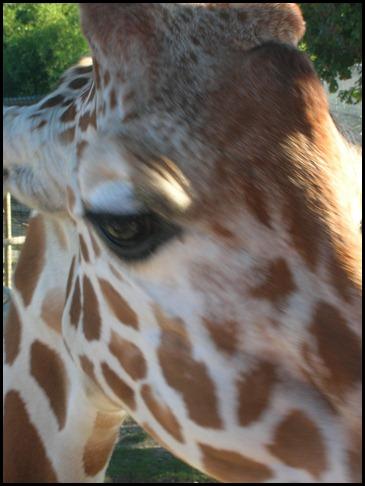 Richmond Metro Zoo 3rd Grade MES Field Trip 070