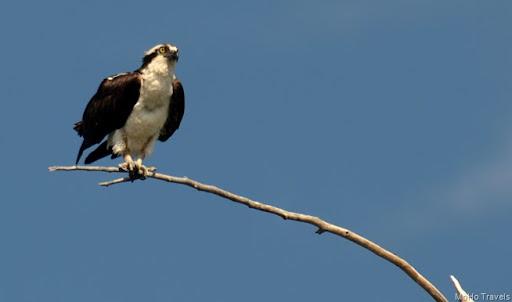 love that osprey
