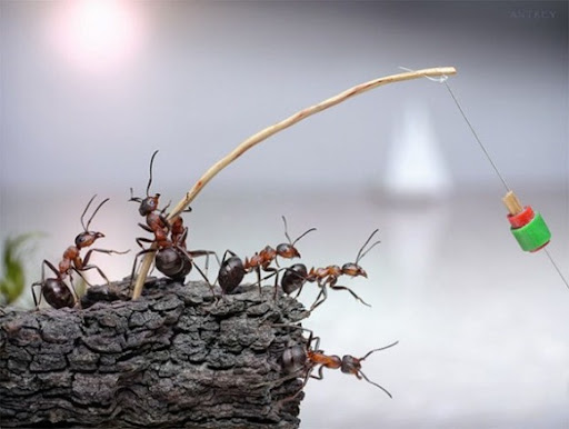 Life-of-Ants-Andrey-Pavlov-21
