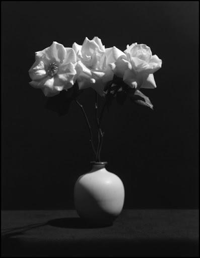 Robert Mapplethorpe, Rose, 1983, impresion de gelatina de plata, copyright Robert Mapplethorpe Foundation. Una de las obras expuestas el año pasado en la Galería Senda (Barcelona)