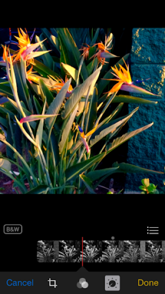 iOS 8 photos app black and white undone