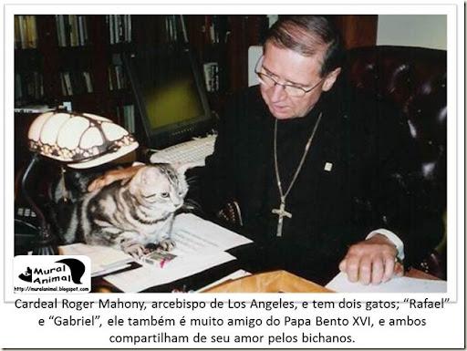 papa_ama_gatos (7)