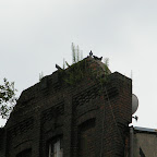 A tree growing on top of an old building.
