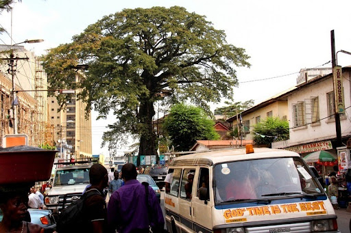 cotton-tree-Freetown-3