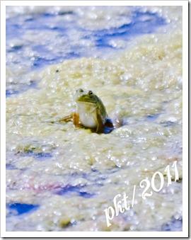 DSC_7145frog