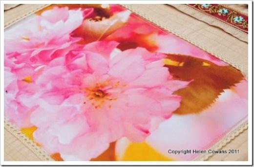 Cherry Blossom close3