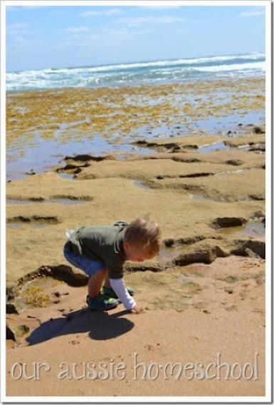 Our Aussie Homeschool ~ Our Roadschool Curriculum 2015