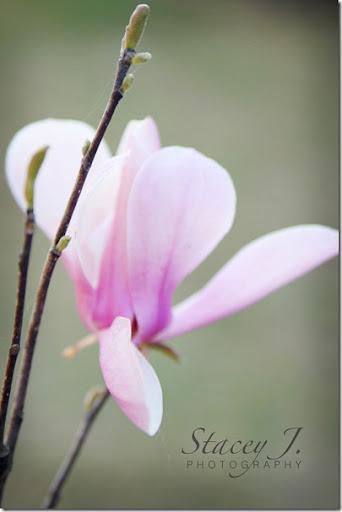 Spring 2012 002 copy