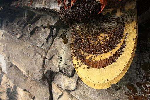 honey-cacciatori-nepal-16