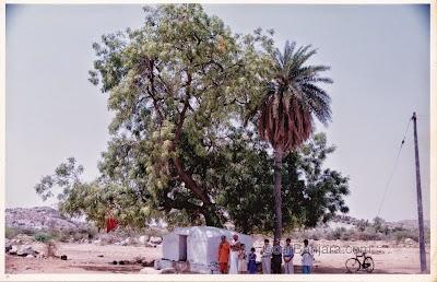 Old Jagadamba Temple, Sevagad