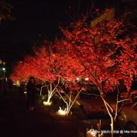 【景點】台中市區賞櫻花勝地?@北屯文昌國小 : 白天晚上都很美呢!