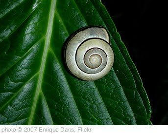 'Caracol sobre hoja' photo (c) 2007, Enrique Dans - license: http://creativecommons.org/licenses/by/2.0/