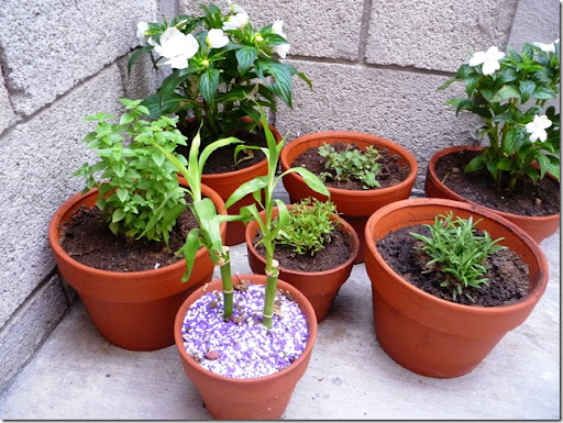 Mis plantas (2)