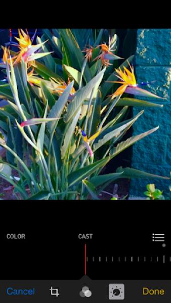 iOS 8 photos app cool color cast
