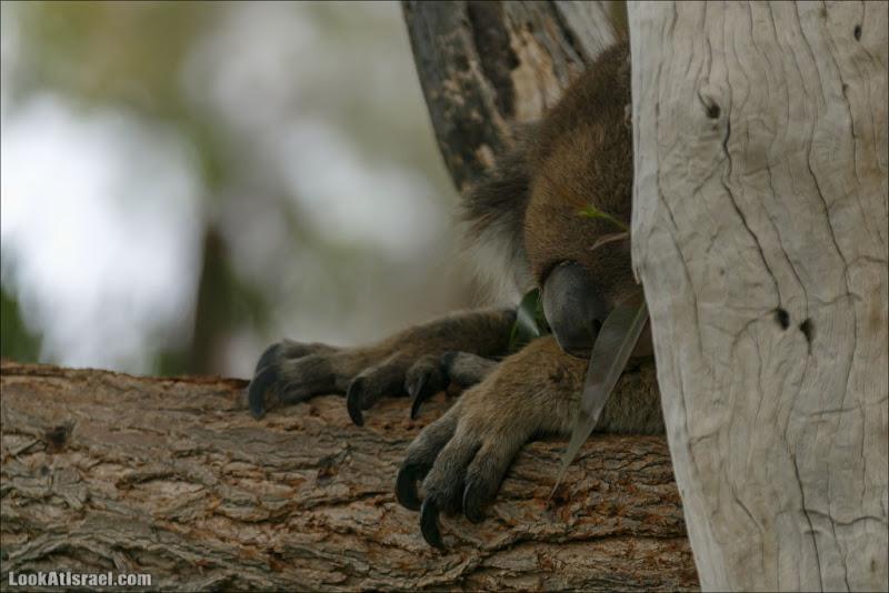 В парке Гуру есть не только кенгуру