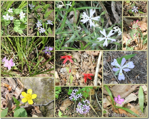 2012-03-30 Buffalo River Flowers Collage