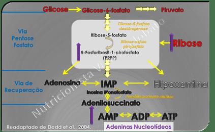 Ribose_thumb2 D-Ribose