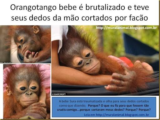 oragotango (1)