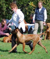 Revodana's Manhattan's Transfer puppy male V3-1.JPG