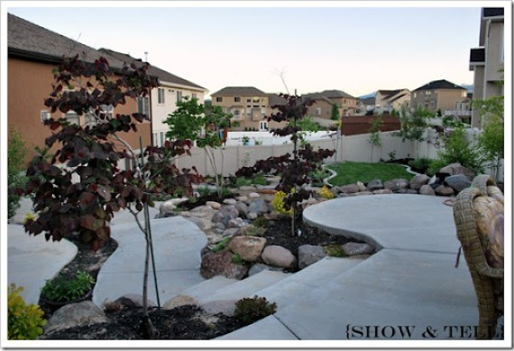 backyard 2011 033