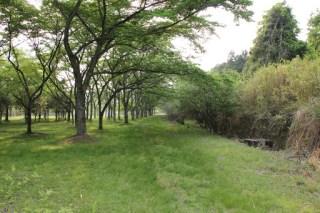旧近鉄大阪線廃線跡