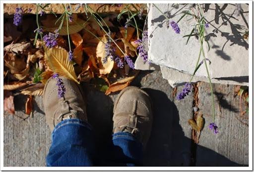fall lavender