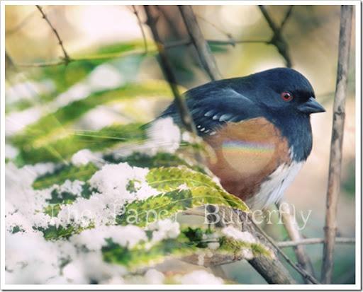 Rainbow Wing Bird 810 WM