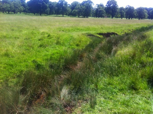 Ditch in Richmond Park where Helodrilus oculatus was found