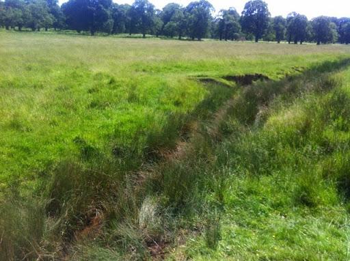 Ditch in Richmond Park where Helodrilus oculatus was found