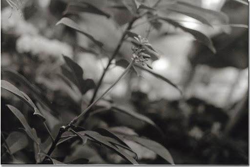 Botanical-Gardens-5-AP-56-Y-6-M-9