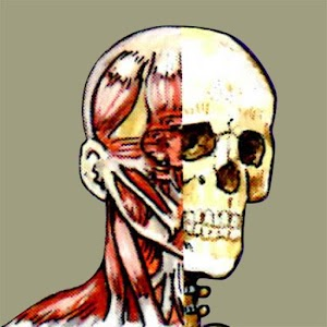 Flash Anatomy Head Neck Muscle