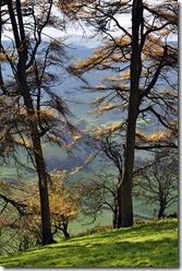 Larch view