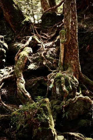 aokigahara-suicide-forest-skb.4918.large_slideshow